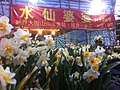 HK CWB 維園年宵市場 Victoria Park Fair - stall vendor n flowers Jan-2012 Ip4.jpg