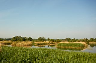Ham Wall Wetland nature reserve in Somerset, England