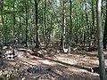 Hambach forest 39.jpg