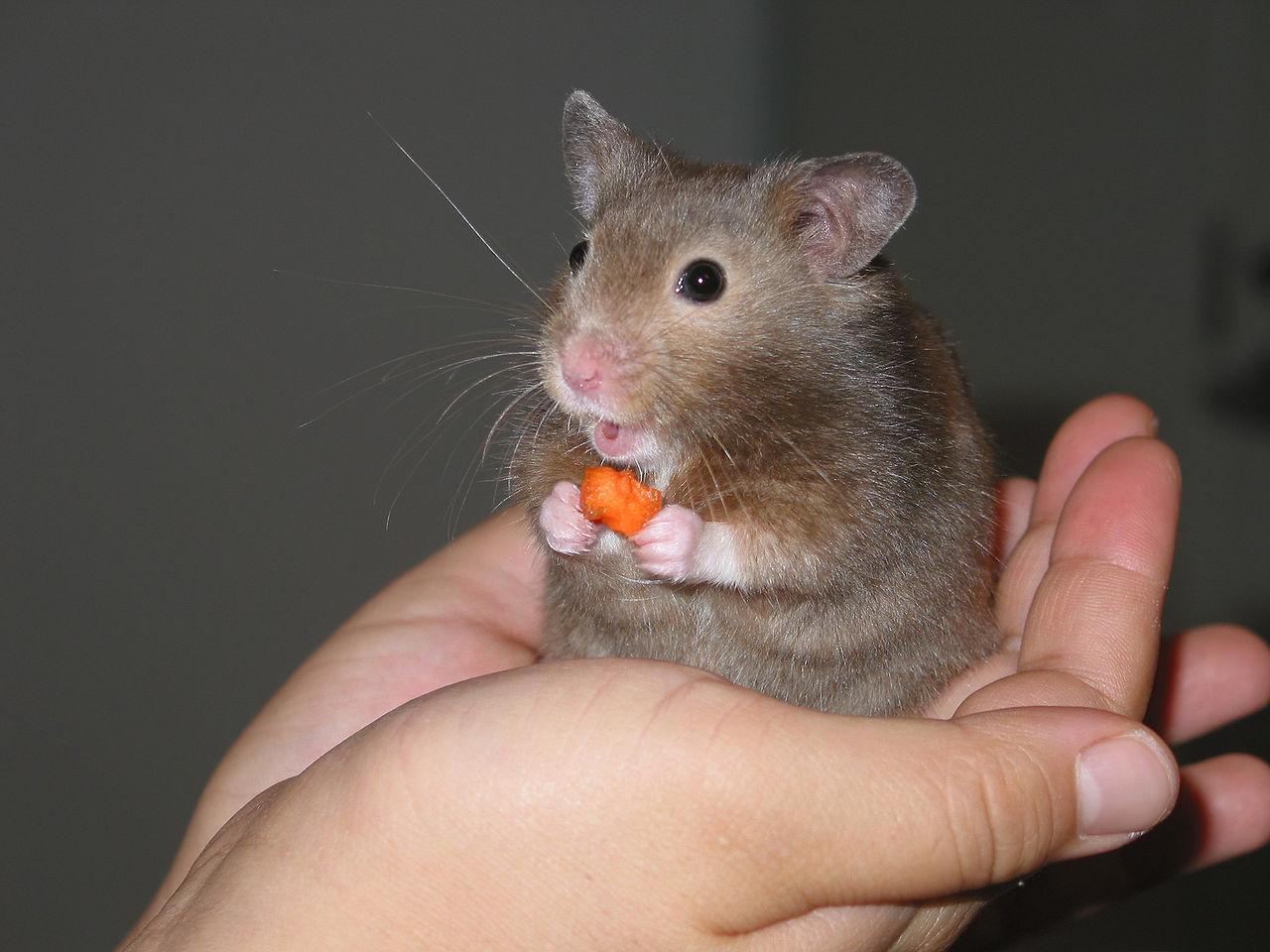 Hamsterx.com
