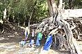 Hanalei, Kauai, Hawaii - panoramio (34).jpg