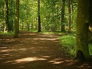 Eilenriede - Walking path in Eilenriede