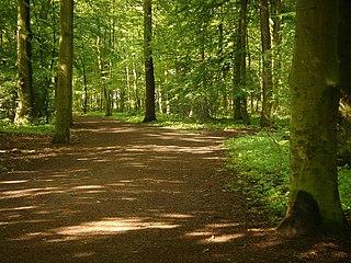 Eilenriede urban forest