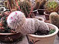 Happy cactus plant is Smiling.jpg