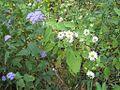 Hatchie Natl Wildlife Refuge 041.jpg
