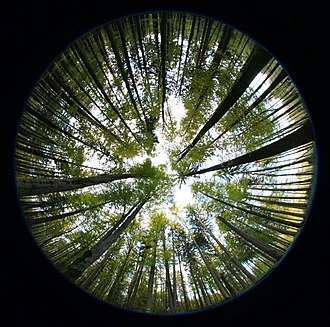 Hemispherical photography - Hemispherical photograph used to study LAI, canopy closure, or other canopy indices.