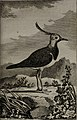 Histoire naturelle des oiseaux (1781) (14728224866).jpg