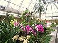 Hong Kong Botanical Gardens - IMG 9689.JPG