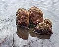 Hoog water in de Friese boezem. 26-02-2020. (d.j.b) 06.jpg