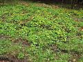 Horní luka, rostliny II.jpg