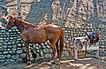Horse and Tack At Will Rogers State Historic Park.jpg