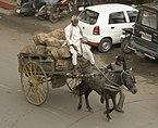 Horse carriage, Gwalior.jpg