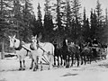 Horse drawn sled on trail from Chitina to Fairbanks, Alaska, circa 1910 (AL+CA 4726).jpg
