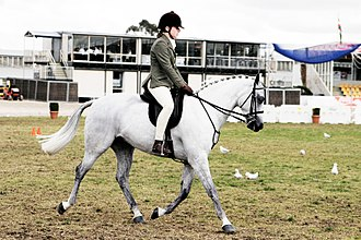 An Australian Pony shown under saddle Horse riding in coca cola arena - melbourne show 2005.jpg