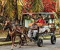 Horsedrawn Cart in Cuba.jpg