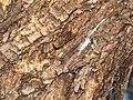 Horsefly-greece-alonisos-0a.jpg