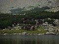 Horses in Rila.jpg