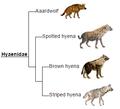 Hyaenidae phylogeny (eng).png