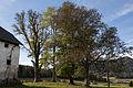 ID 1077 Baumgruppe bei Zeutschach 00007.jpg