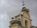 Iglesia de San Isidoro. Cigüeñas en el campanario.jpg