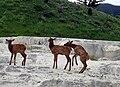 Image-OPAL TERRACE with elks 2.jpg