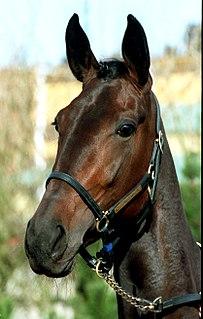 Ina Scot Swedish Standardbred racehorse