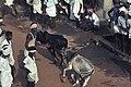 India-1970 068 hg.jpg