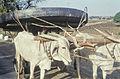 India1961-060 hg.jpg