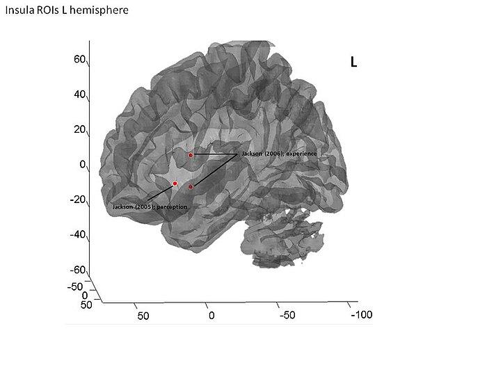 Insular cortex of human brain (left hemisphere).jpg