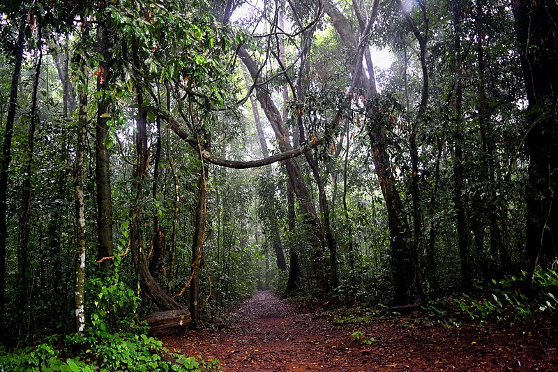 The scary woodlands of Trichur