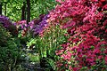 Isabella Plantation, Richmond Park.jpg