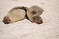 Islas Galápagos00.jpg