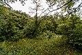 Izvoare – Risipeni, monument al naturii img 029.jpg
