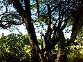 JNU Tree and Greenery.jpg