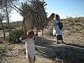 Jamal Shah Camel Person.jpg