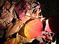 Japanese nature leaves.jpg