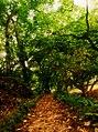 Jardín Botánico de Caracas - Distrito Capital 4.jpg