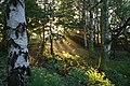 Jowett's Wood - geograph.org.uk - 248149.jpg
