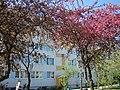 KALISZ koniec kwietnia 30 Serbinowska - panoramio.jpg