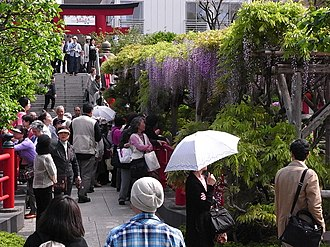 Wisteria floribunda - Image: Kameido Tenjinsha 1