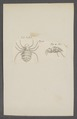 Kend - Print - Iconographia Zoologica - Special Collections University of Amsterdam - UBAINV0274 068 03 0002.tif