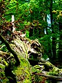 Kirschweiler, Naturschutzgebiet Silberich – Kirschweiler Festung - panoramio (2).jpg