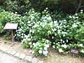 Kobe Municipal Arboretum in 2013-6-22 No,44.JPG