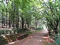 Kunming Botanical Garden - DSC03273.JPG