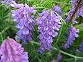 Květ fialové barvy.jpg