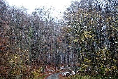 LSG HM 00026 Hessisch Oldendorfer Wesertal Nord - zwischen Pötzen und dem Süntelturm (7).jpg