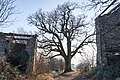 La Grande Quercia - Scandiano (RE) Italia - 1 Febbraio 2015 - panoramio (2).jpg