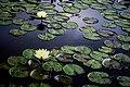 Lago das Ninféias.jpg
