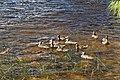 Lake Bierstadt Hike 7-24 (31586625844).jpg