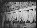 Lancaster Co., PA. Tobacco hanging, tobacco barn, Enos Royer farm, 1938 by Sheldon Dick.jpg